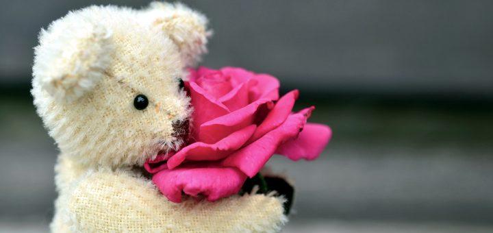 Teddy-Rose